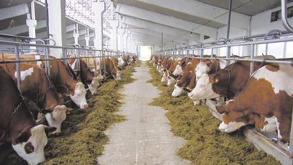 общее знакомство с предприятием молочной продукции