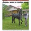 Выпуск газеты «Заря» № 58-60 от 20 мая 2016 года
