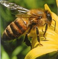 Весенние заботы пчеловода