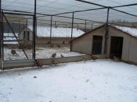 Птичья ферма в Озерном