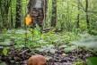 Как не  заблудиться в лесу?